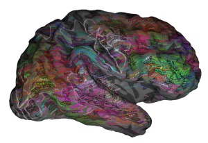 Professor Jack Gallant University California Berkeley brain language meaning.