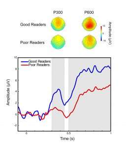 Figure 2 Event-related brain activity in good and poor readers while reading short passages. Good readers are better at realising when additional information must be retrieved (increased P300), and at integrating that information into a coherent meaning representation (increased P600).