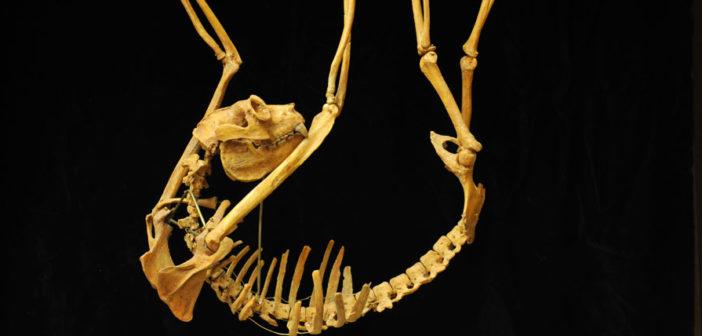 Division Fossil Primates